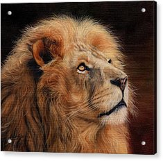 Majestic Lion Acrylic Print by David Stribbling
