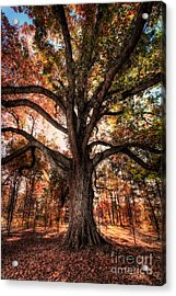 Majestic Oak - Autumn In Greensboro I Acrylic Print by Dan Carmichael