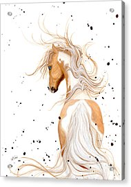 Majestic Palomino Pinto Acrylic Print