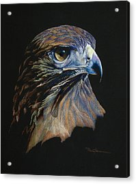Majestic Raptor Red-tail Hawk Acrylic Print