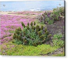 Majestic Shoreline Acrylic Print