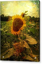 Majestic Sunflower  Acrylic Print