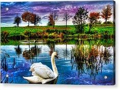 Majestic Swan Acrylic Print
