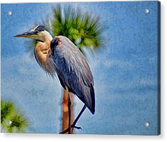 Acrylic Print featuring the photograph Majestic Tri-colored Heron by Pamela Blizzard