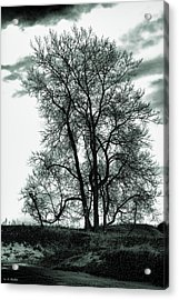 Acrylic Print featuring the photograph Majesty by Lauren Radke