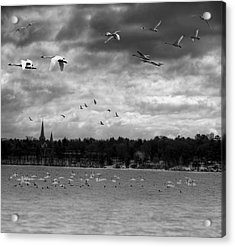 Major Migration Acrylic Print by Thomas Young