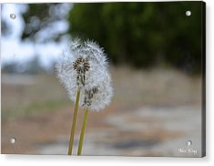 Acrylic Print featuring the photograph Make A Wish by Alex King