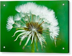 Acrylic Print featuring the photograph Make A Wish by Annette Hugen