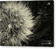 Make A Wish Acrylic Print by Clare Bevan