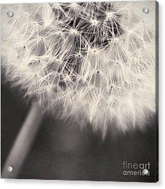 make a wish III Acrylic Print