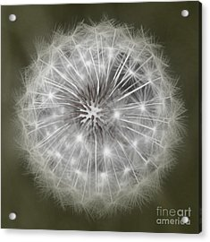 Make A Wish Acrylic Print by Peggy Hughes