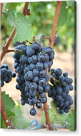 Acrylic Print featuring the photograph Make Me Wine by Debra Kaye McKrill