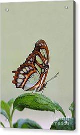 Malachite Butterfly #5 Acrylic Print