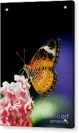 Malay Lacewing Butterfly I Acrylic Print by Kenneth Montgomery