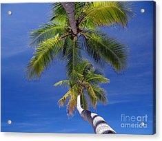 Maldivian 10 Acrylic Print by Giorgio Darrigo