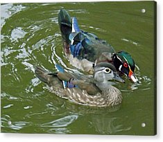 Male And Female Wood Ducks Acrylic Print