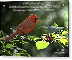 Male Cardinal On Dogwood Branch With Verse Acrylic Print by Debbie Portwood
