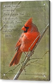 Male Cardinal On Twigs With Bible Verse Acrylic Print by Debbie Portwood