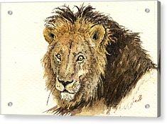 Male Lion Acrylic Print