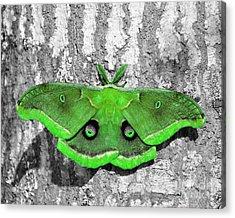 Male Moth Green Acrylic Print by Al Powell Photography USA