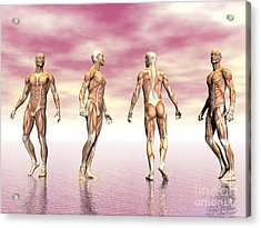 Male Muscular System From Four Points Acrylic Print by Elena Duvernay