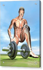 Male Musculature Looking At A Dumbbell Acrylic Print by Elena Duvernay