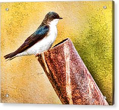 Male Tree Swallow No. 2 Acrylic Print by Bill Kesler