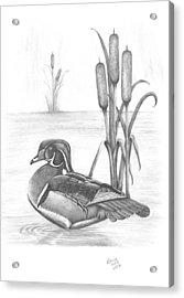 Male Wood Duck Acrylic Print by Patricia Hiltz