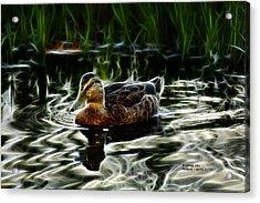 Mallard - 2043 - F Acrylic Print by James Ahn