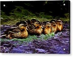 Mallard -  9230 - F Acrylic Print