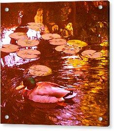 Mallard Duck On Pond 3 Square Acrylic Print by Amy Vangsgard