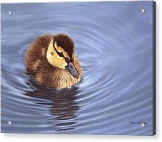 Mallard Duckling Painting Acrylic Print by Rachel Stribbling