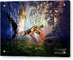 Mallard Ducks Flying To The Lake Acrylic Print