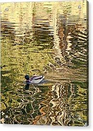 Mallard Painting Acrylic Print by Kate Brown