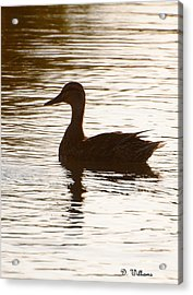Mallard Silhouette Acrylic Print by Dan Williams