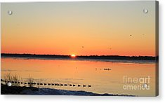 Mallards At Sunrise Acrylic Print