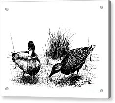 Mallards In The Marsh Acrylic Print by Steve Knapp