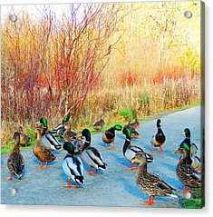 Acrylic Print featuring the photograph Mallards In The Park by Karen Horn
