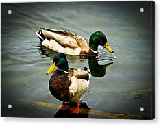 Mallards On Mendota Acrylic Print