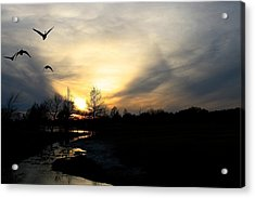 Mallards Silhouette At Sunset Acrylic Print