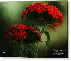 Maltese Cross Acrylic Print by Christopher Mace