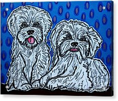 Maltese Duo Blue Bg Acrylic Print