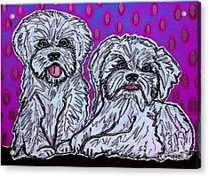 Maltese Duo Pink Bg Acrylic Print
