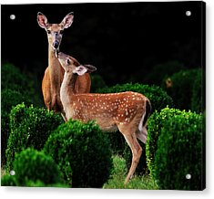 Mama And Her Fawn Acrylic Print by Angel Cher