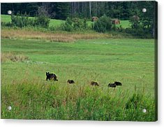 Mama Bear And 4 Cubs Acrylic Print