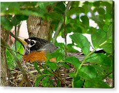 Acrylic Print featuring the photograph Mama Bird by Melissa Messick