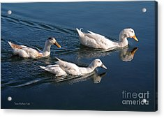 Mama Duck Leads The Way Acrylic Print