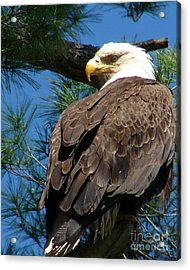 Mama Eagle Watching Acrylic Print