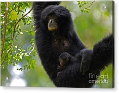 Mamas Hammock Acrylic Print by Ashley Vincent