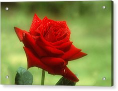 Mama's Red Rose Acrylic Print